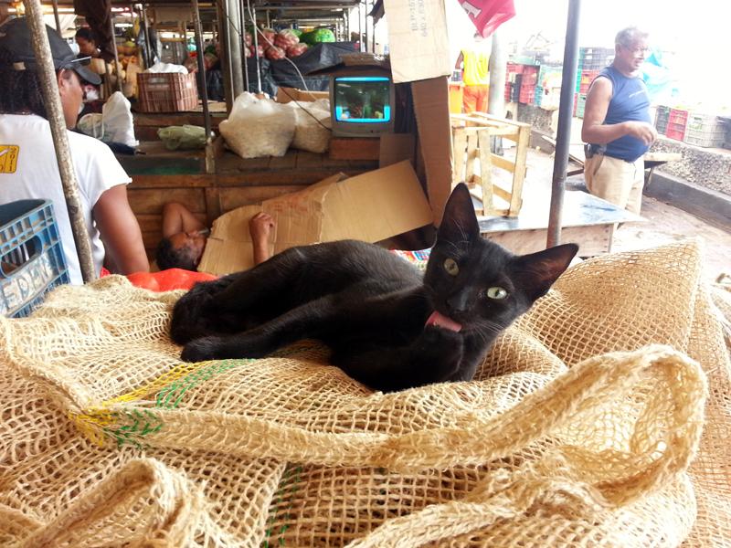 gato-ver-o-peso-Belém-do-Pará